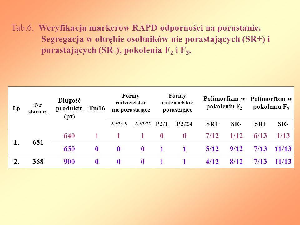 Polimorfizm w pokoleniu F2 Polimorfizm w pokoleniu F3
