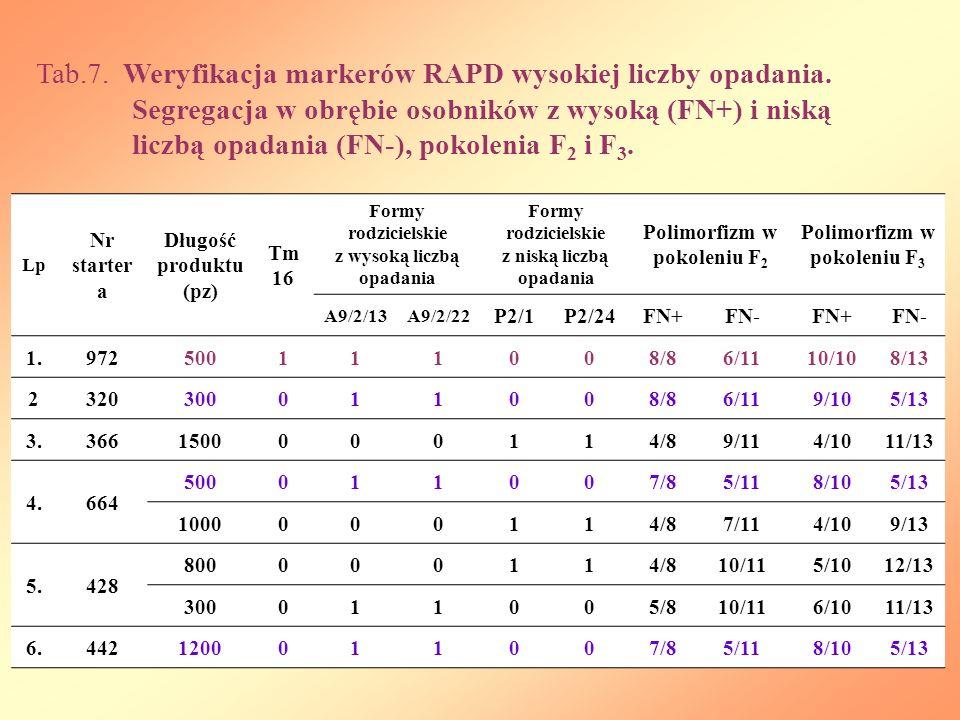 Tab. 7. Weryfikacja markerów RAPD wysokiej liczby opadania