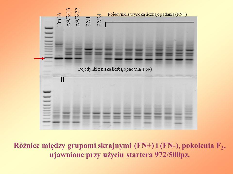 P2/24 Pojedynki z wysoką liczbą opadania (FN+) Tm16. A9/2/13. A9/2/22. P2/1. Pojedynki z niską liczbą opadania (FN-)