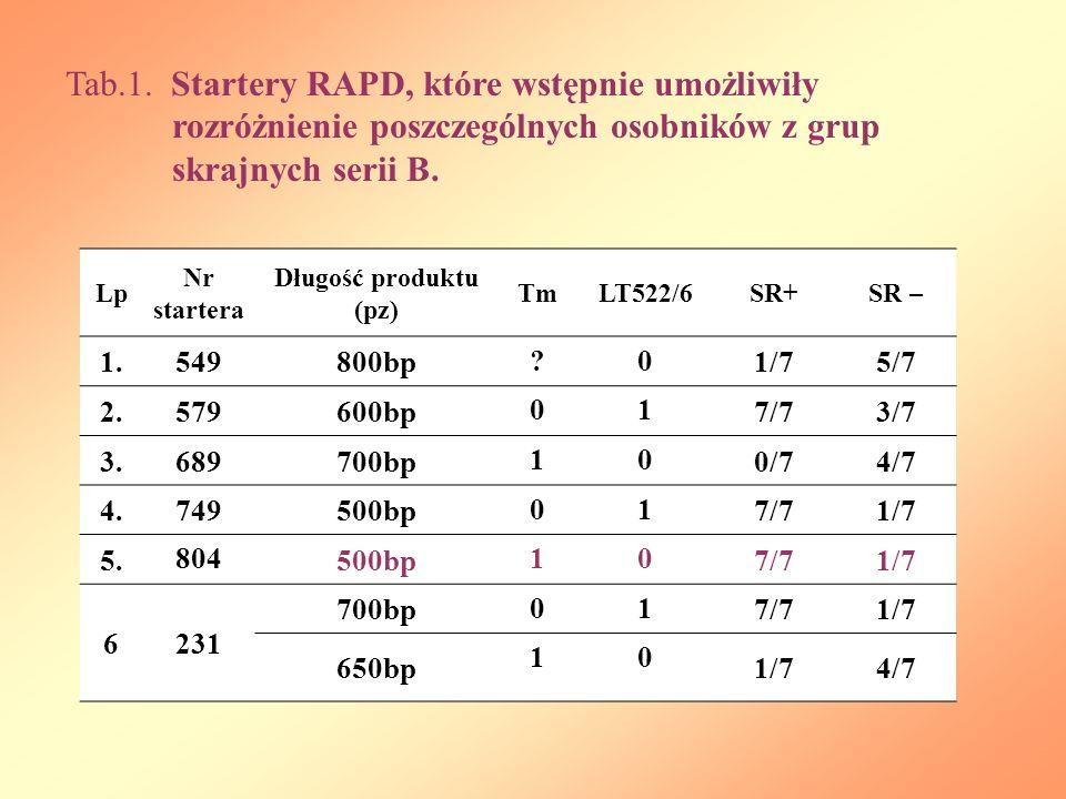 Tab. 1. Startery RAPD, które wstępnie umożliwiły