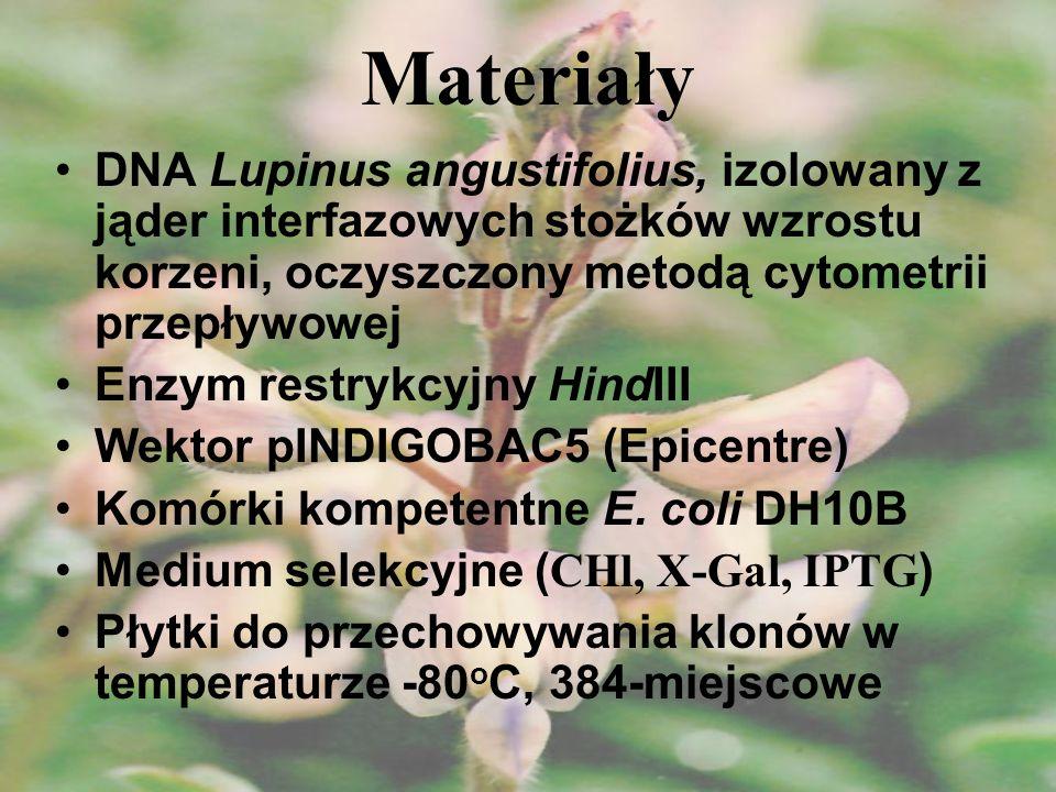 MateriałyDNA Lupinus angustifolius, izolowany z jąder interfazowych stożków wzrostu korzeni, oczyszczony metodą cytometrii przepływowej.