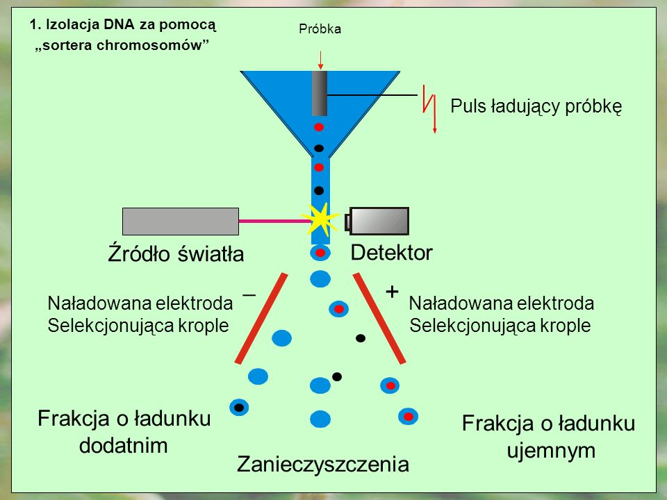 """sortera chromosomów"