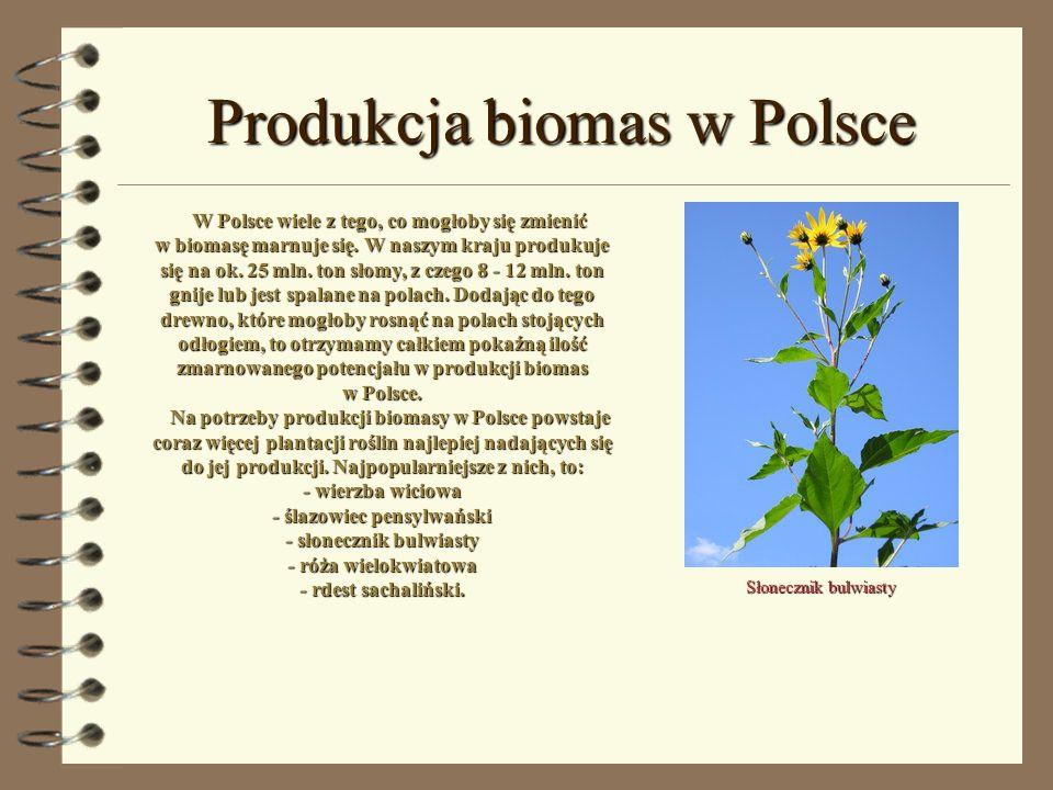 Produkcja biomas w Polsce