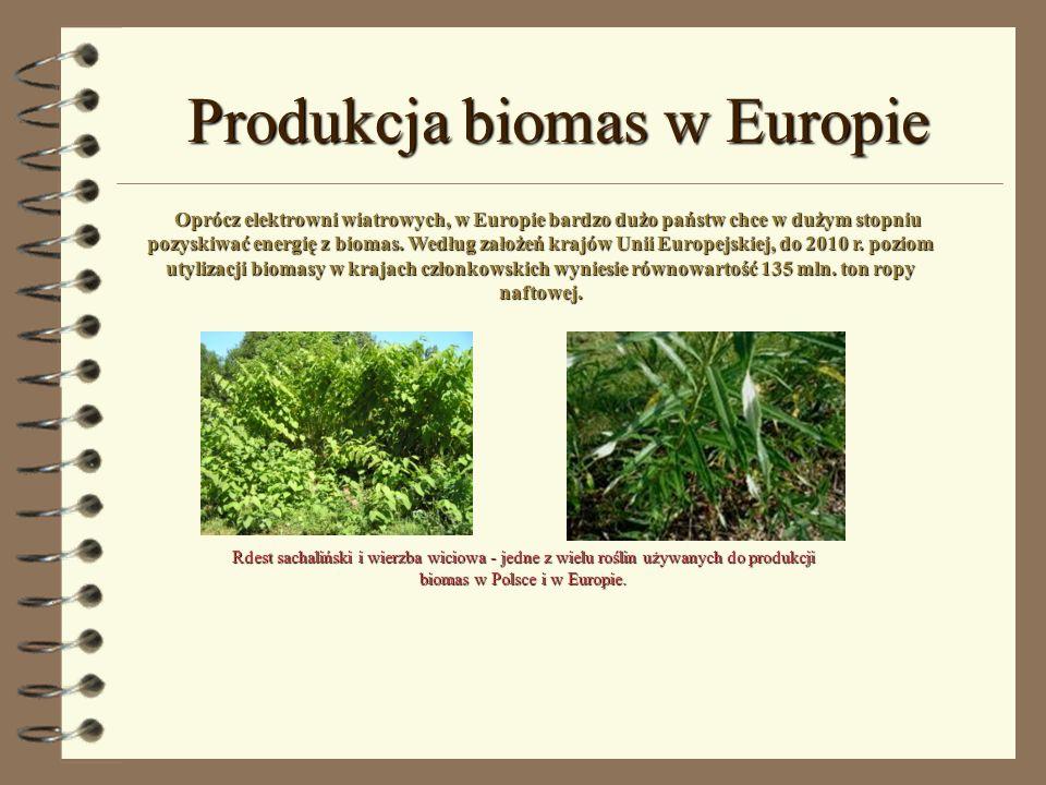 Produkcja biomas w Europie
