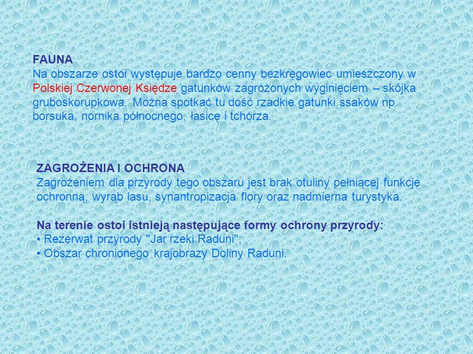FAUNA Na obszarze ostoi występuje bardzo cenny bezkręgowiec umieszczony w Polskiej Czerwonej Księdze gatunków zagrożonych wyginięciem – skójka gruboskorupkowa. Można spotkać tu dość rzadkie gatunki ssaków np. borsuka, nornika północnego, łasicę i tchórza.