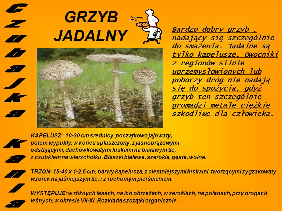 JADALNY Czubajka kania GRZYB