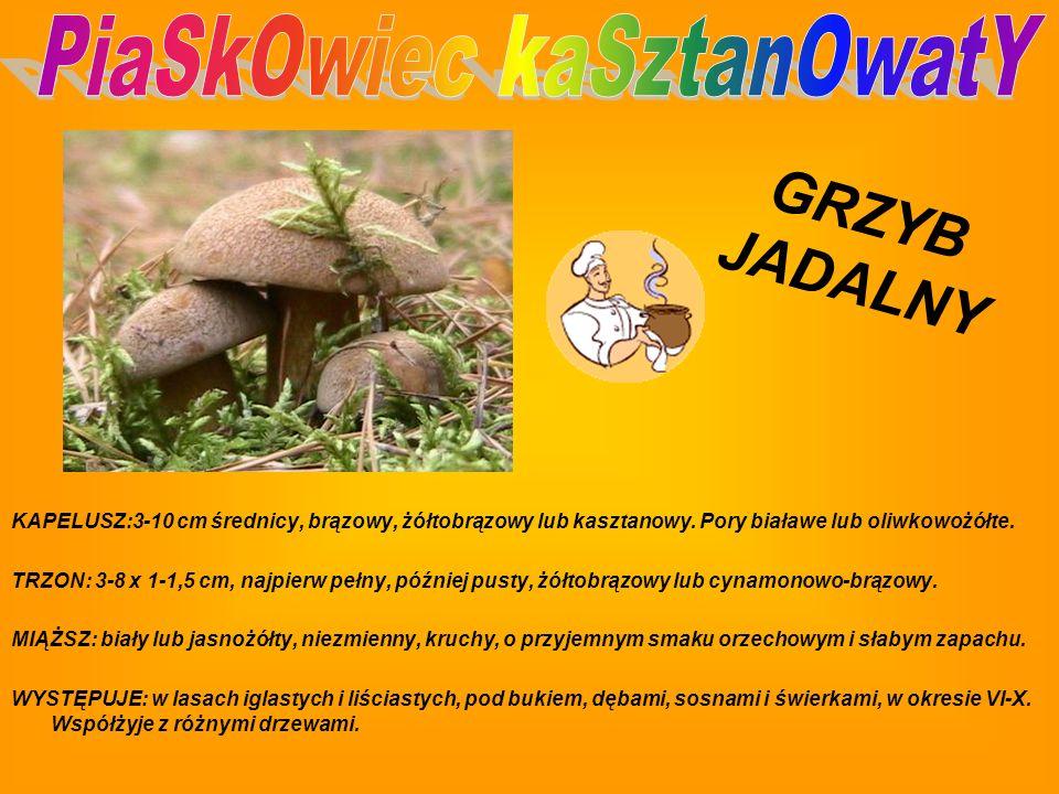 PiaSkOwiec kaSztanOwatY