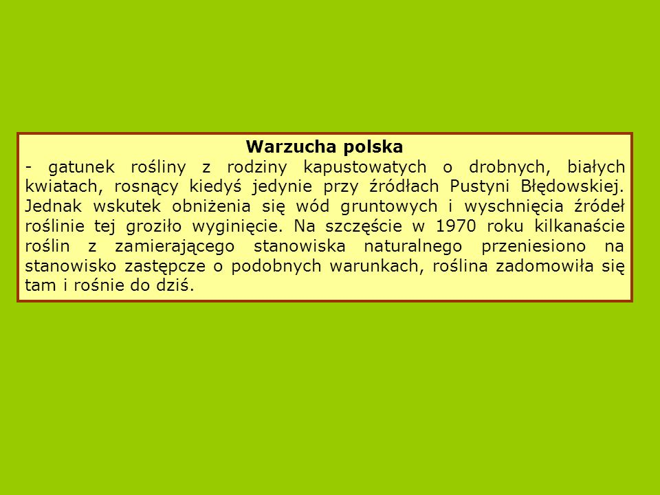 Warzucha polska
