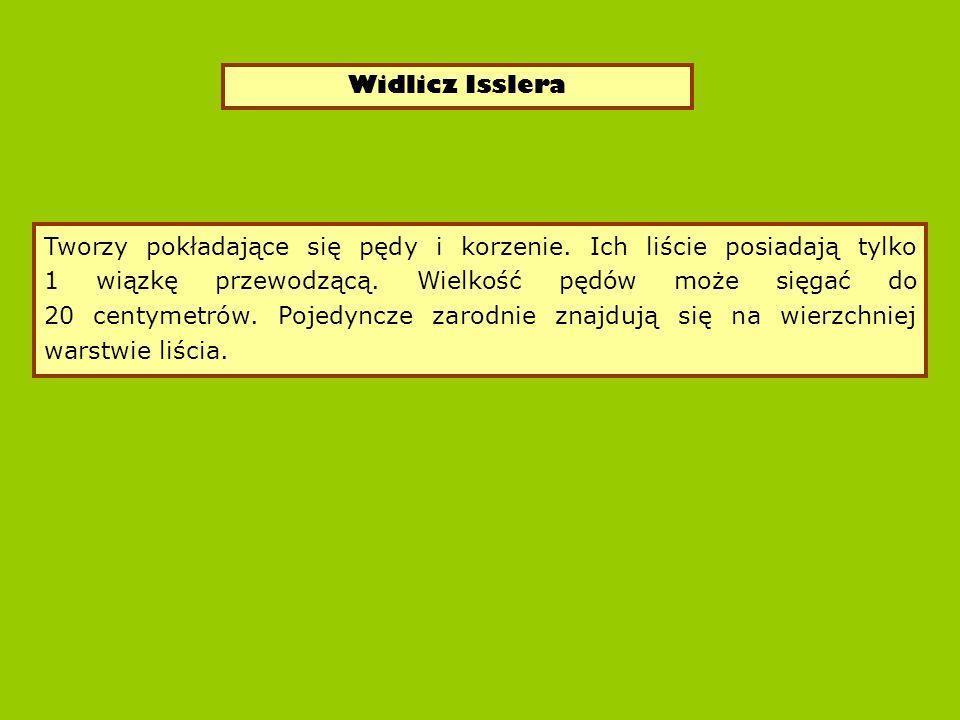 Widlicz Isslera