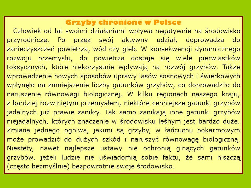 Grzyby chronione w Polsce