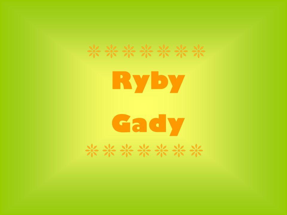 Ryby Gady