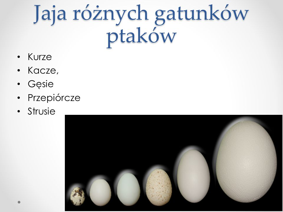 Jaja różnych gatunków ptaków