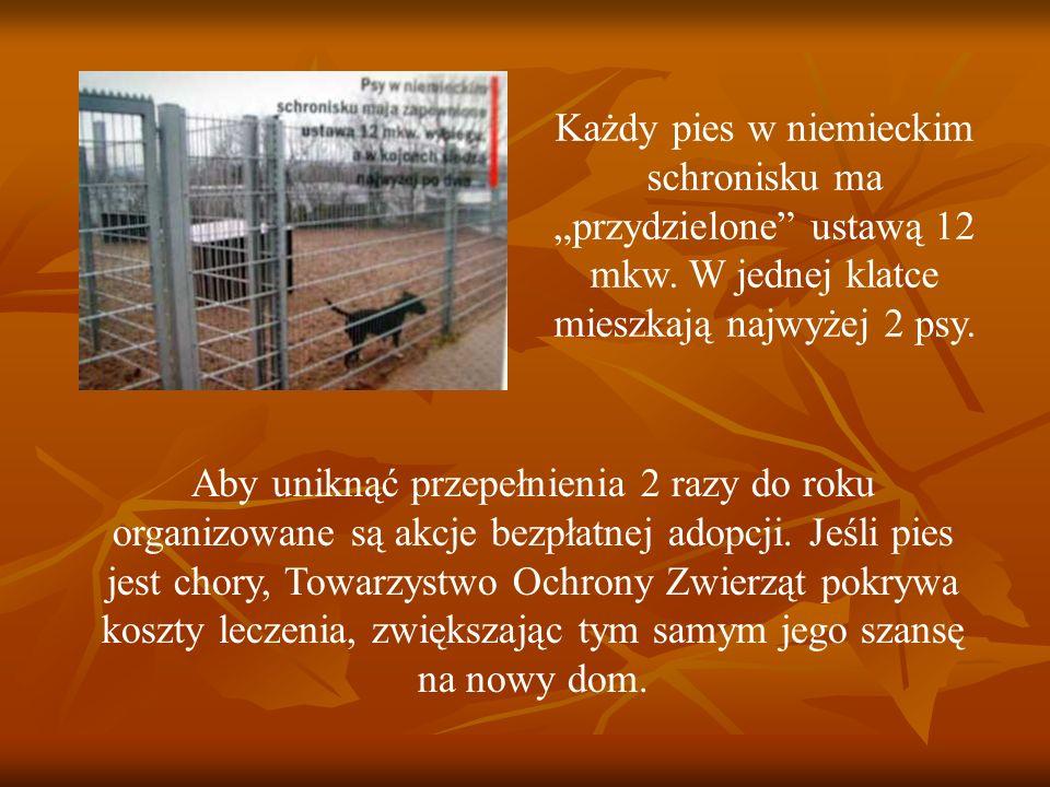 """Każdy pies w niemieckim schronisku ma """"przydzielone ustawą 12 mkw"""