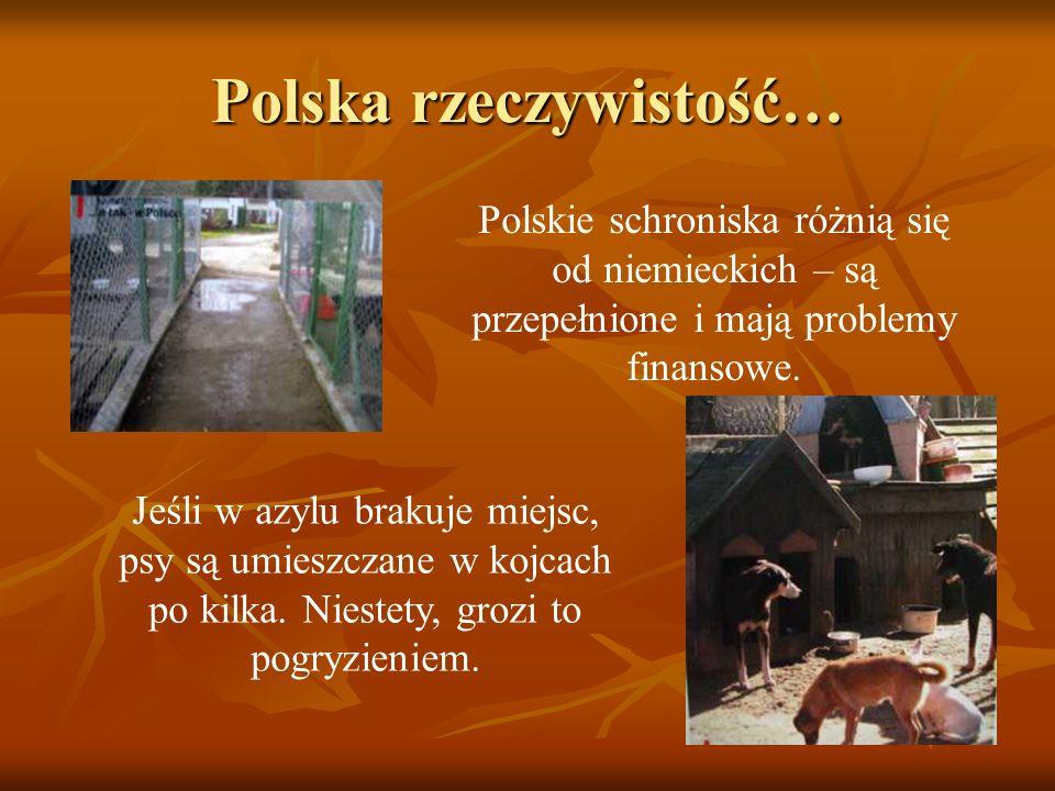 Polska rzeczywistość…
