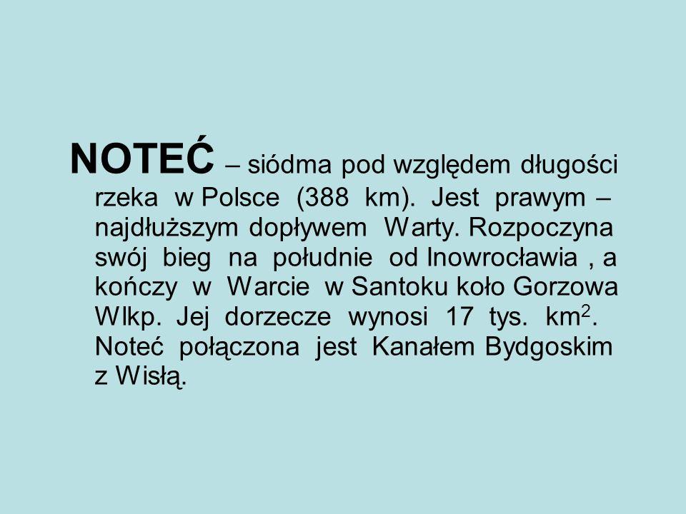 NOTEĆ – siódma pod względem długości rzeka w Polsce (388 km)