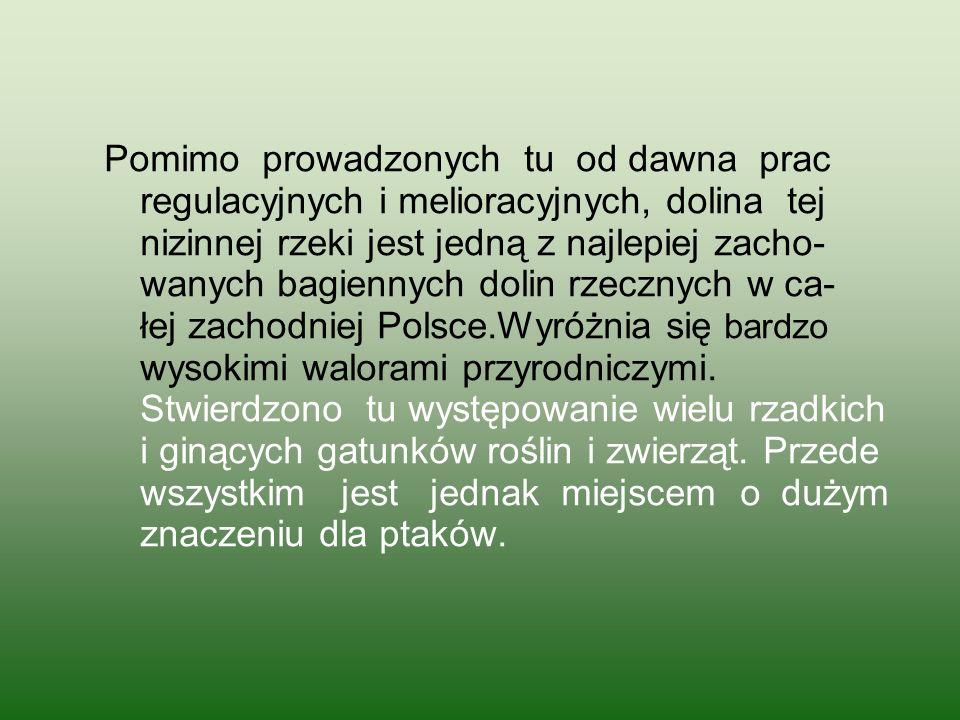 Pomimo prowadzonych tu od dawna prac regulacyjnych i melioracyjnych, dolina tej nizinnej rzeki jest jedną z najlepiej zacho- wanych bagiennych dolin rzecznych w ca- łej zachodniej Polsce.Wyróżnia się bardzo wysokimi walorami przyrodniczymi.