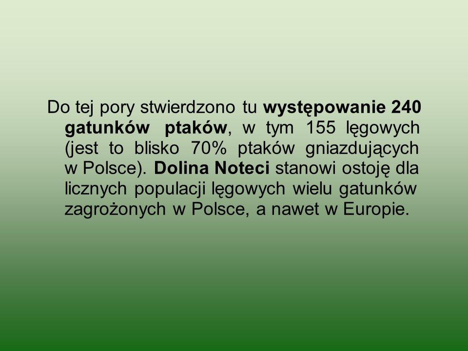 Do tej pory stwierdzono tu występowanie 240 gatunków ptaków, w tym 155 lęgowych (jest to blisko 70% ptaków gniazdujących w Polsce).