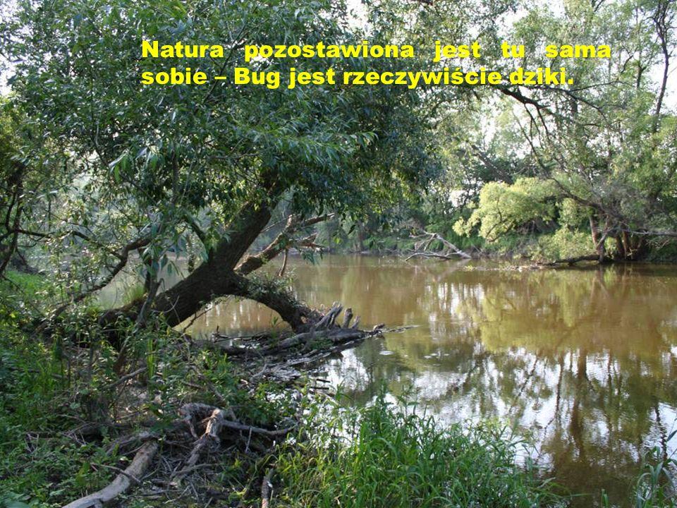 Natura pozostawiona jest tu sama sobie – Bug jest rzeczywiście dziki.