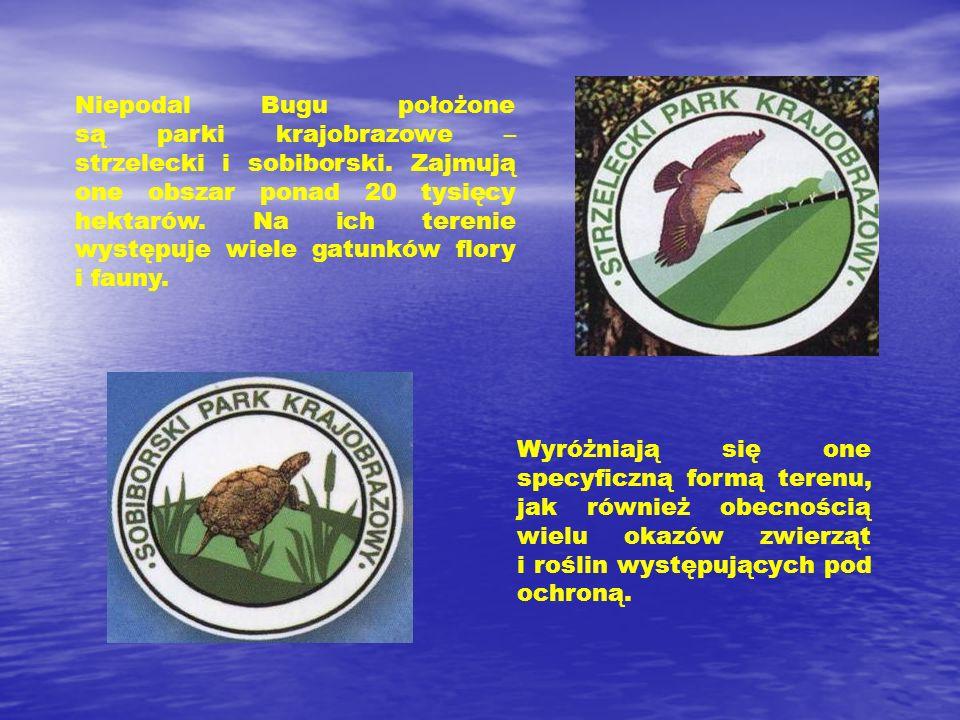Niepodal Bugu położone są parki krajobrazowe – strzelecki i sobiborski