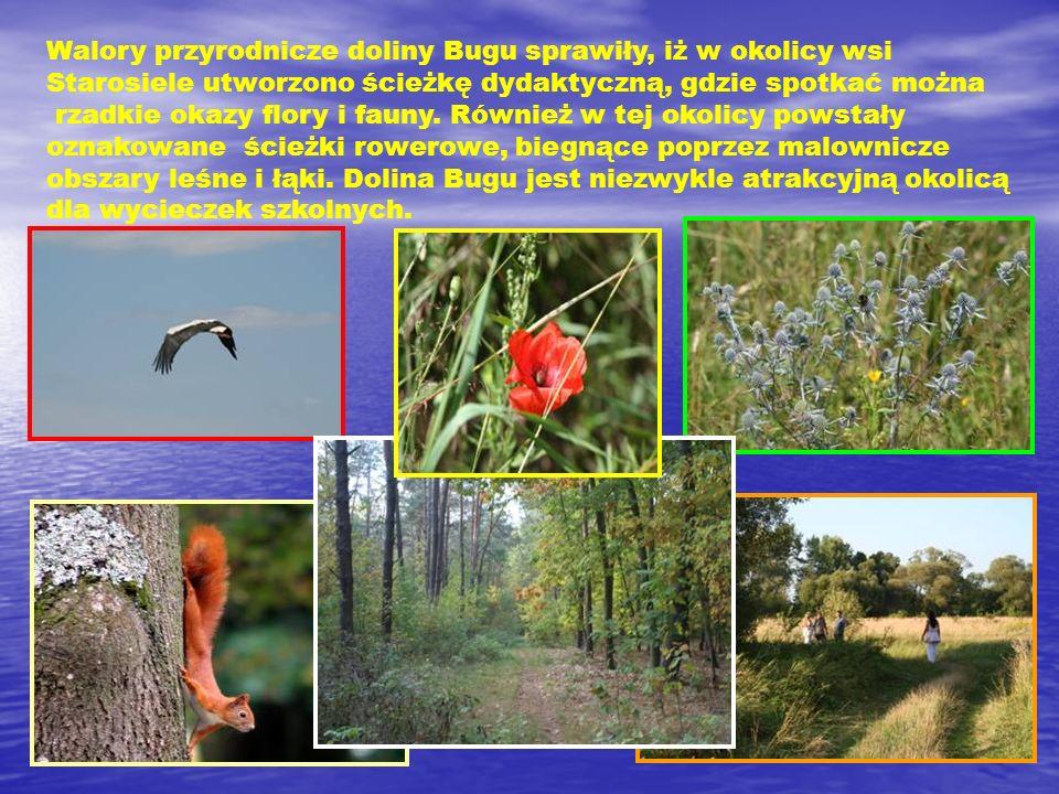Walory przyrodnicze doliny Bugu sprawiły, iż w okolicy wsi Starosiele utworzono ścieżkę dydaktyczną, gdzie spotkać można