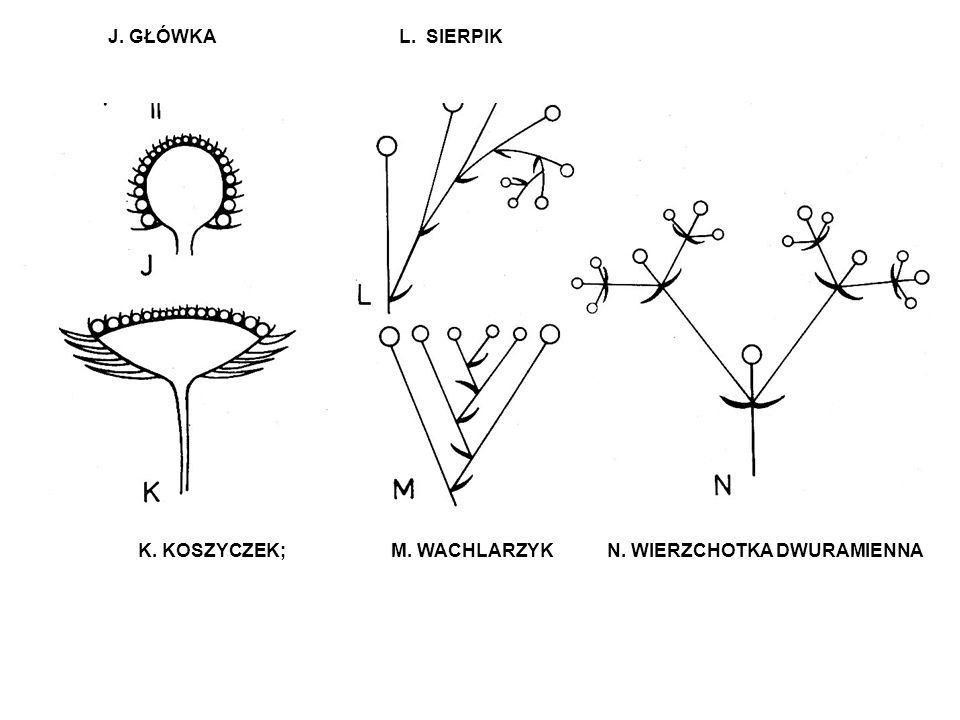 J. GŁÓWKA L. SIERPIK K.