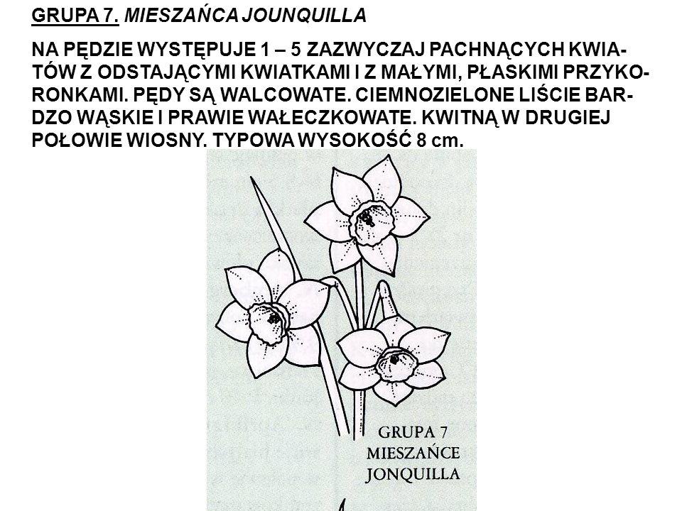 GRUPA 7. MIESZAŃCA JOUNQUILLA