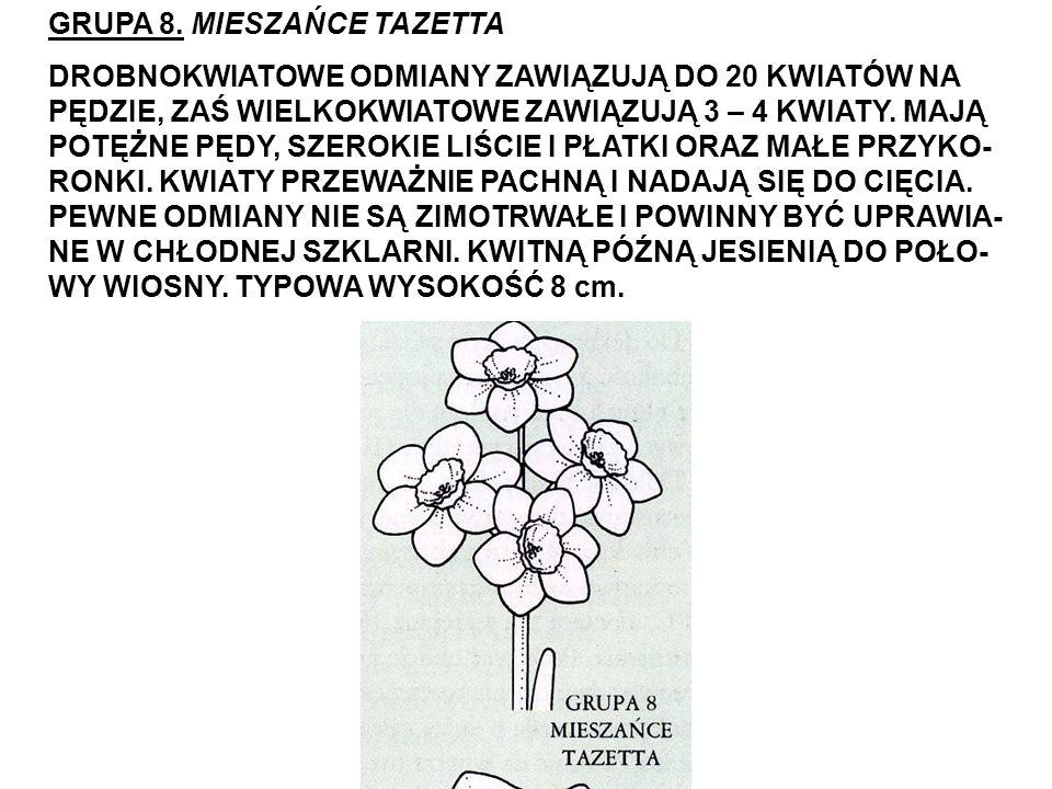 GRUPA 8. MIESZAŃCE TAZETTA