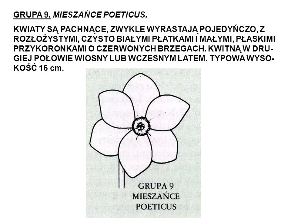 GRUPA 9. MIESZAŃCE POETICUS.