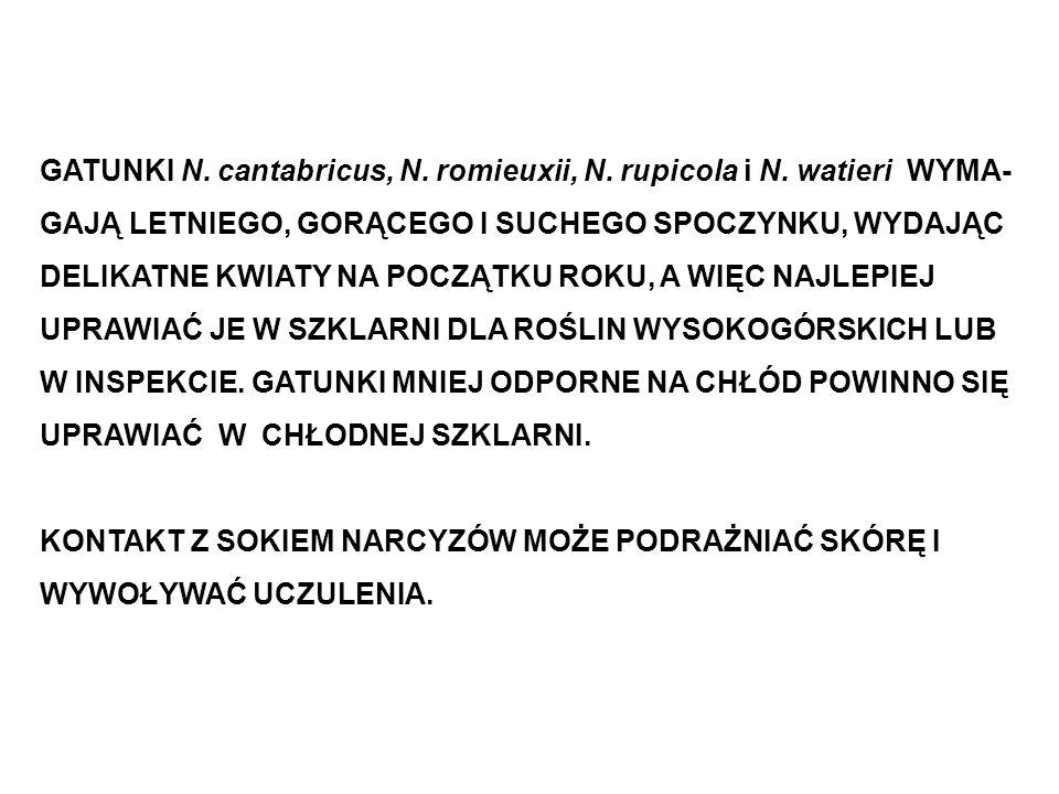 GATUNKI N. cantabricus, N. romieuxii, N. rupicola i N. watieri WYMA-