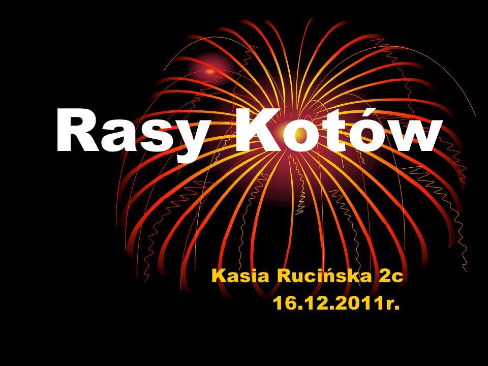 Rasy Kotów Kasia Rucińska 2c 16.12.2011r.