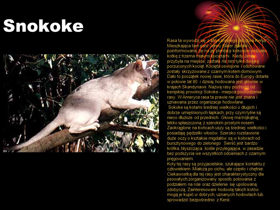 Snokoke