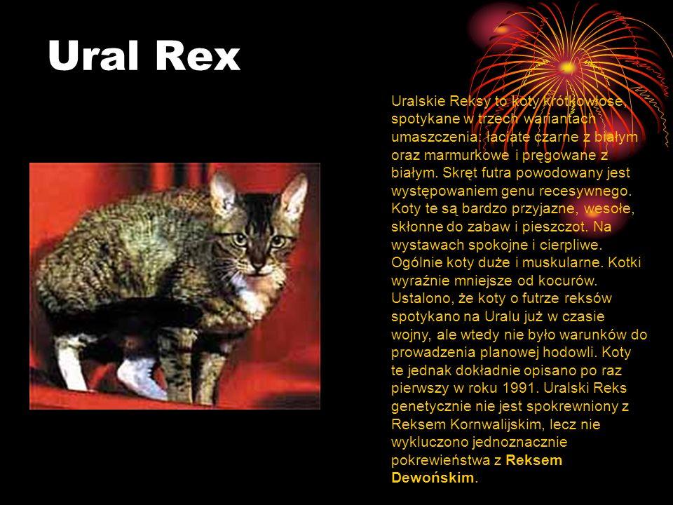 Ural Rex