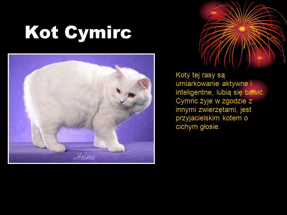 Kot Cymirc