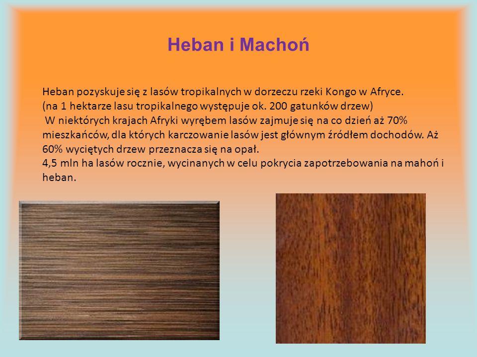 Heban i Machoń Heban pozyskuje się z lasów tropikalnych w dorzeczu rzeki Kongo w Afryce.