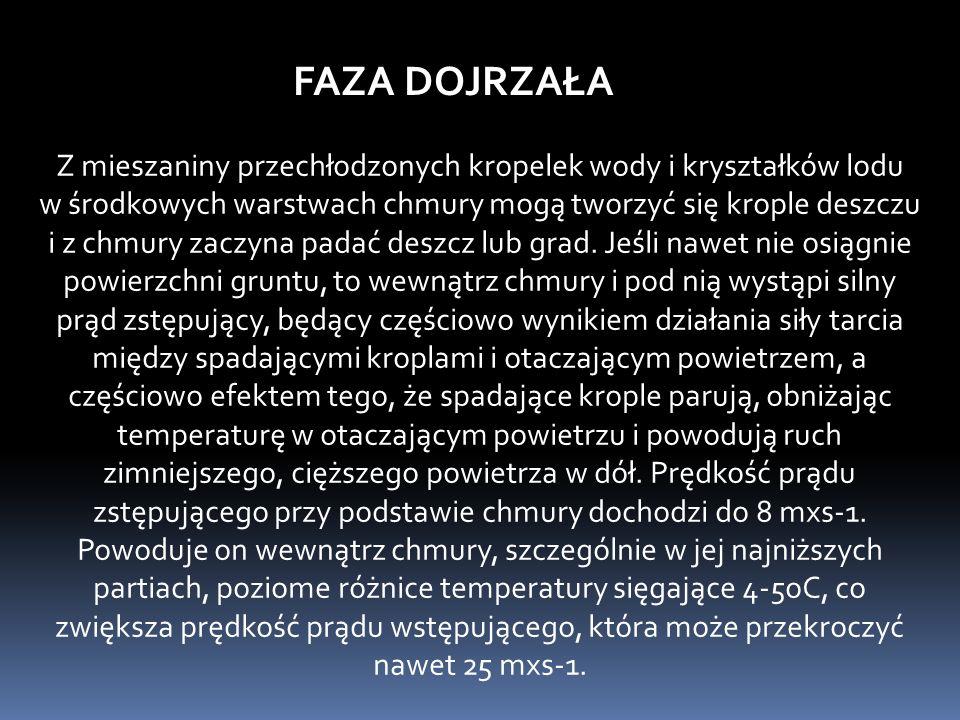 FAZA DOJRZAŁA