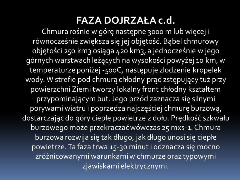 FAZA DOJRZAŁA c.d.