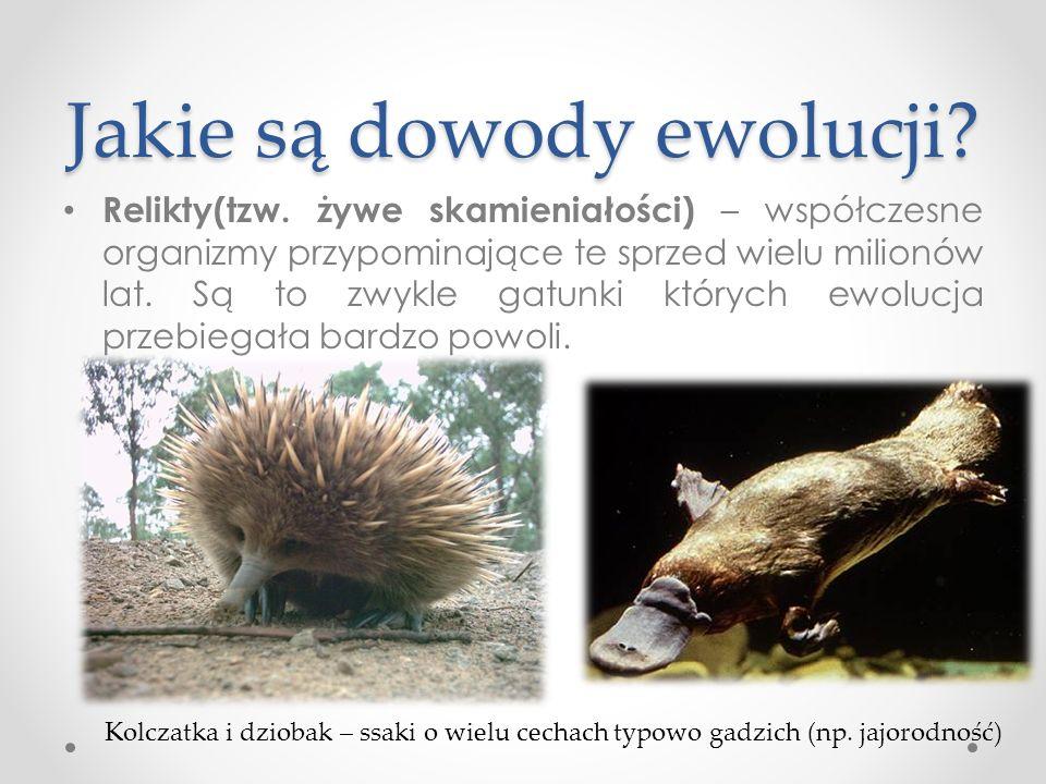 Jakie są dowody ewolucji
