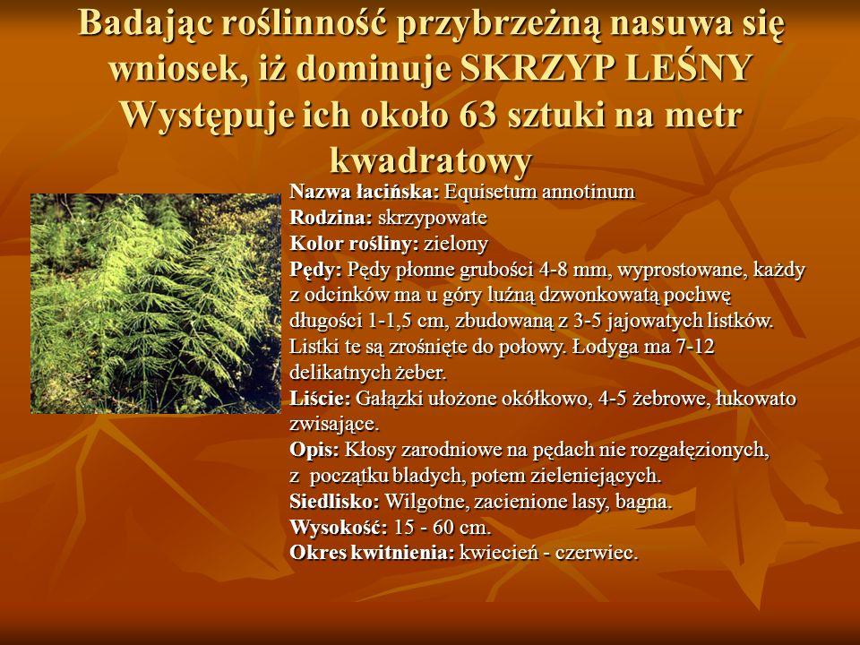 Badając roślinność przybrzeżną nasuwa się wniosek, iż dominuje SKRZYP LEŚNY Występuje ich około 63 sztuki na metr kwadratowy