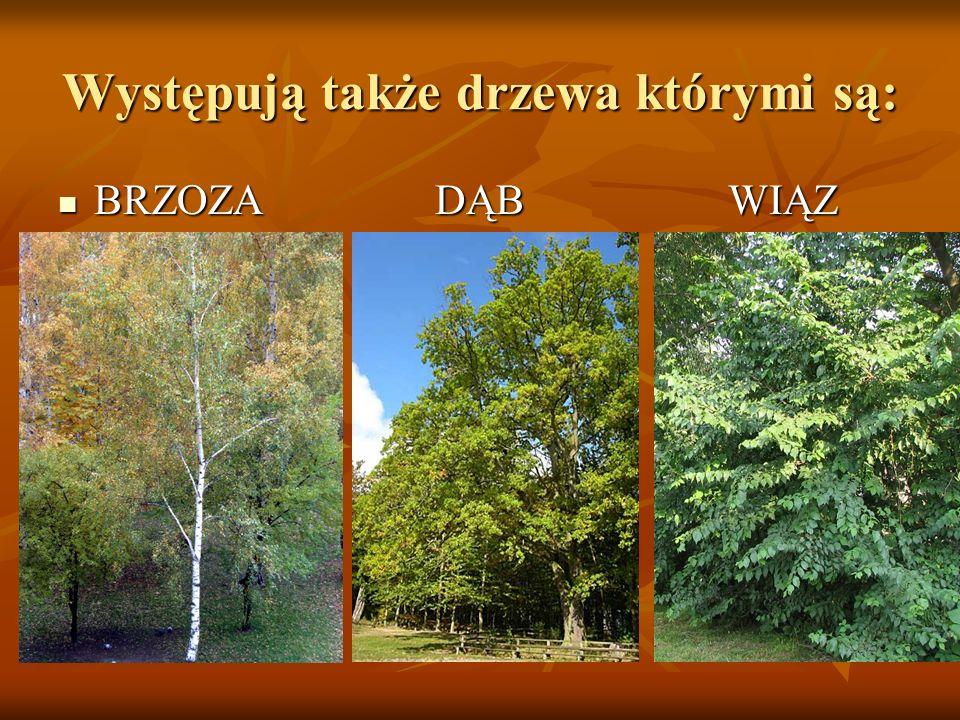 Występują także drzewa którymi są: