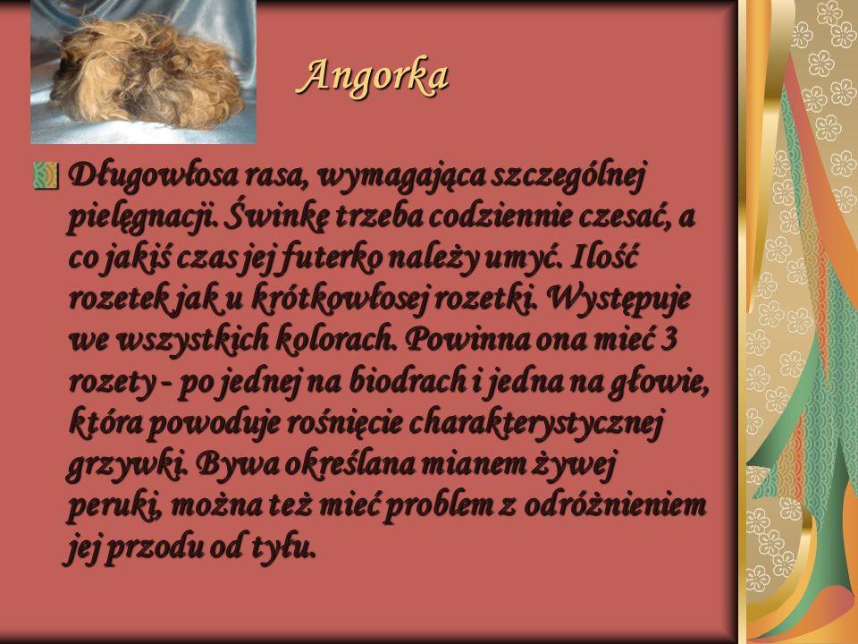 Angorka