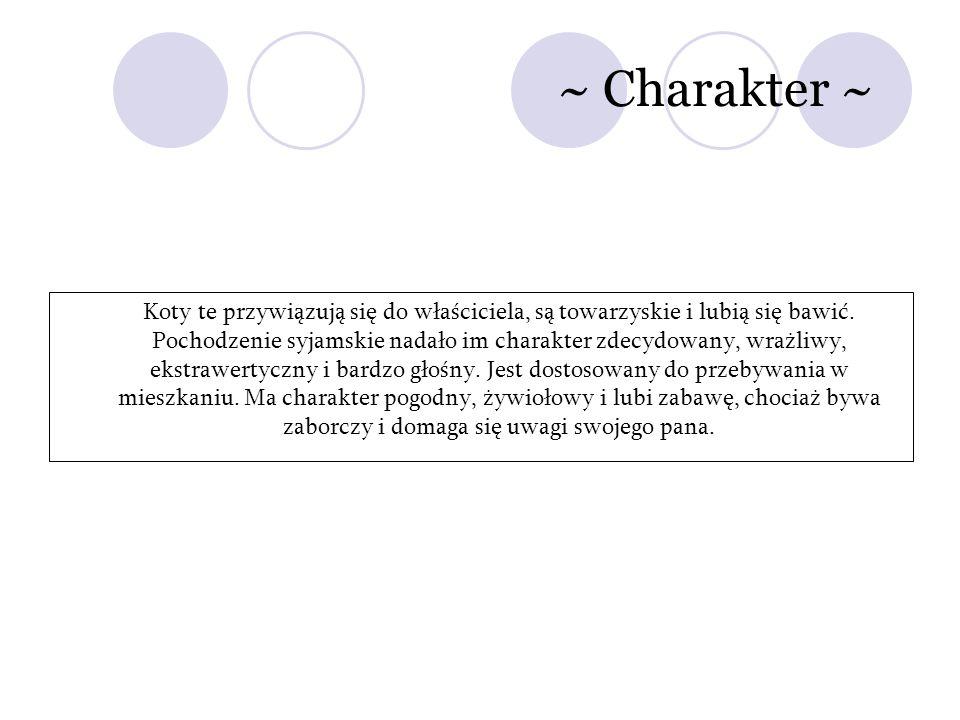 ~ Charakter ~