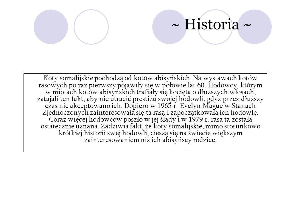 ~ Historia ~