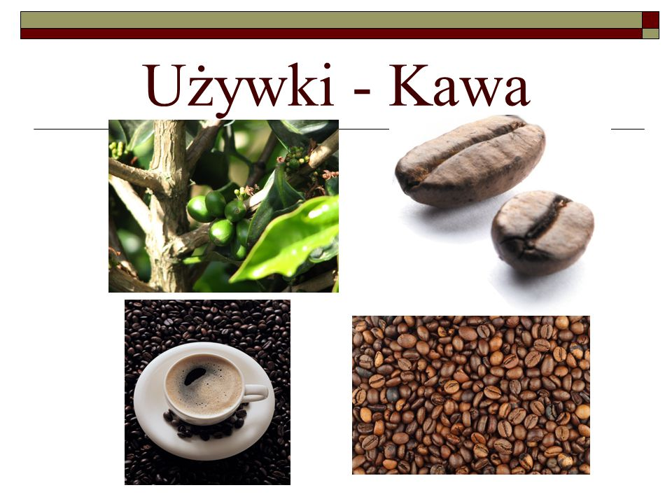 Używki - Kawa