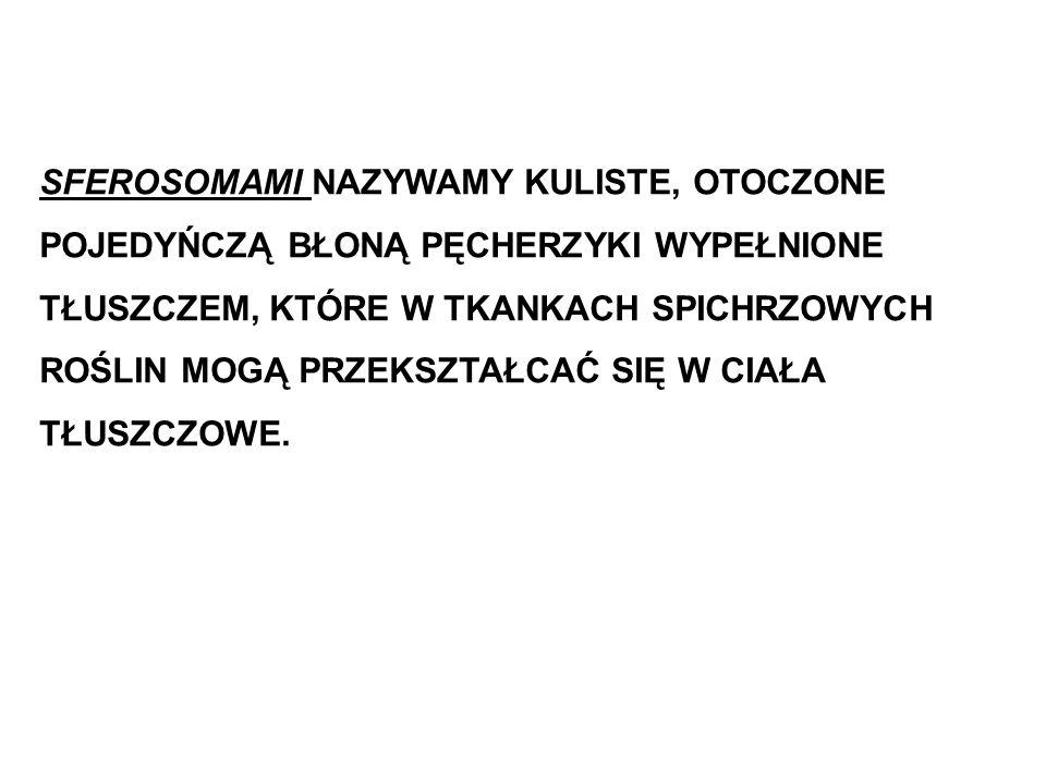 SFEROSOMAMI NAZYWAMY KULISTE, OTOCZONE