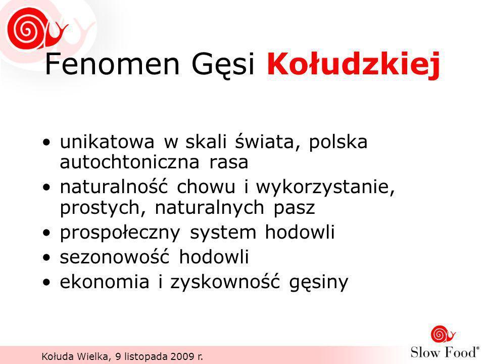 Fenomen Gęsi Kołudzkiej