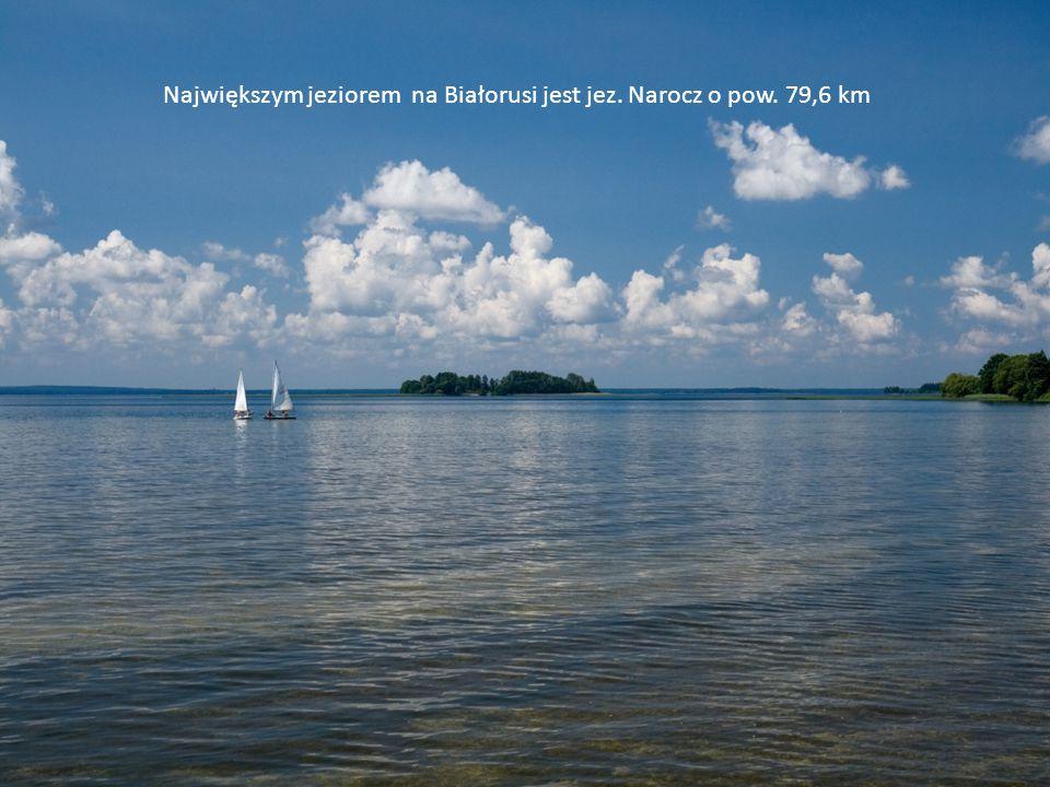 Największym jeziorem na Białorusi jest jeź. Narocz o pow. 79,6 km kw