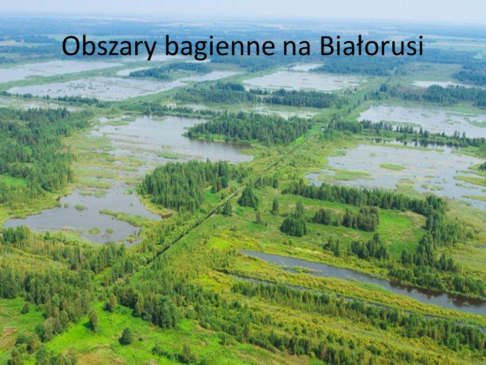 Obszary bagienne na Białorusi