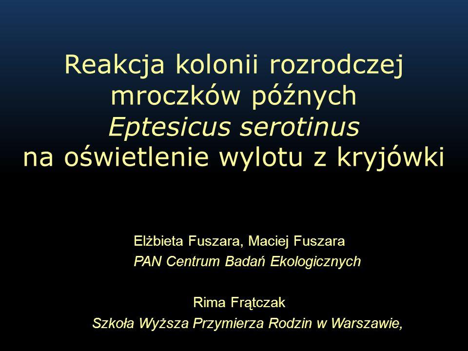 Reakcja kolonii rozrodczej mroczków późnych Eptesicus serotinus na oświetlenie wylotu z kryjówki