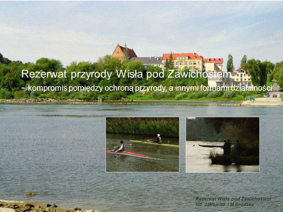 Rezerwat przyrody Wisła pod Zawichostem - kompromis pomiędzy ochroną przyrody, a innymi formami działalności