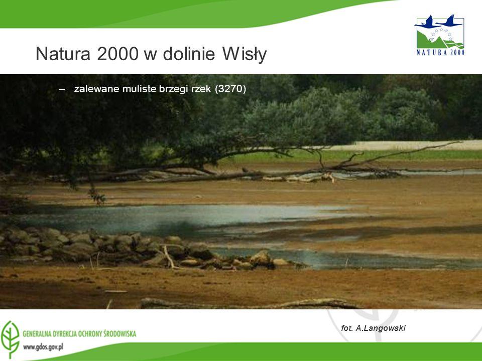 Natura 2000 w dolinie Wisły zalewane muliste brzegi rzek (3270)